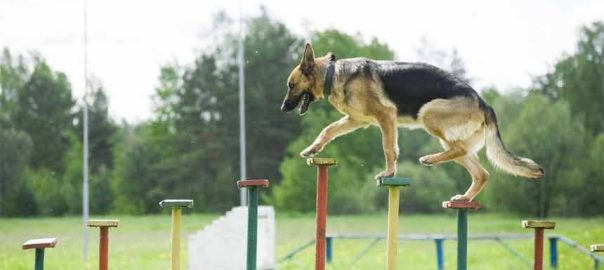 Do Ultrasonic Sounds Hurt Dogs