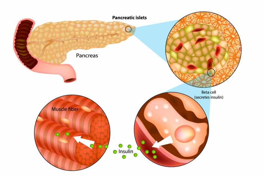 How can I improve my pancreas function