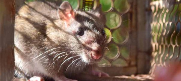 what to do if you have a mouse in your home