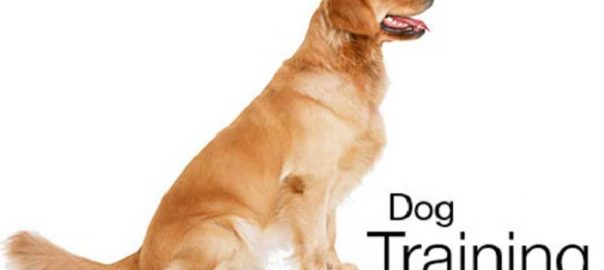 What does Heel mean When Training a Dog