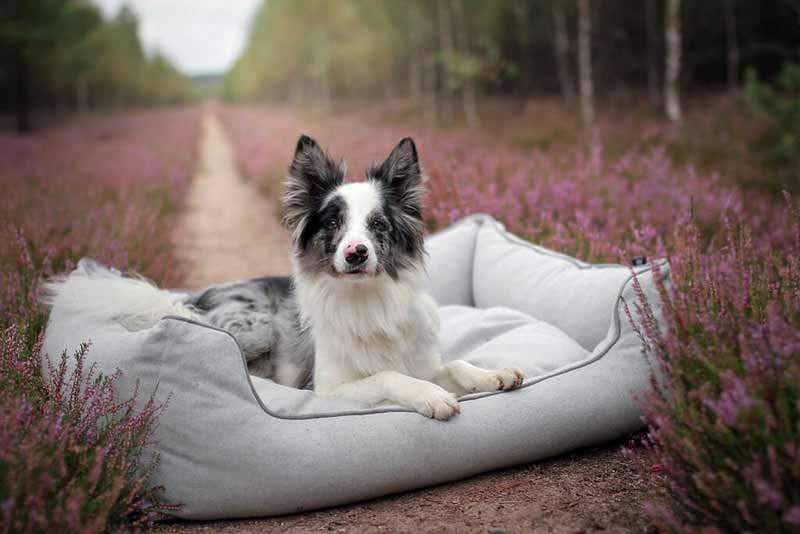 How to Clean a Non-Washable Dog Bed
