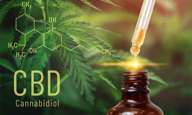 Difference Between CBD Oil and Raw CBD OIL