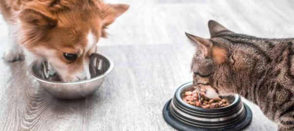 How Many Calories are in Pet Food