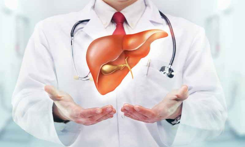 How Does The Liver Work
